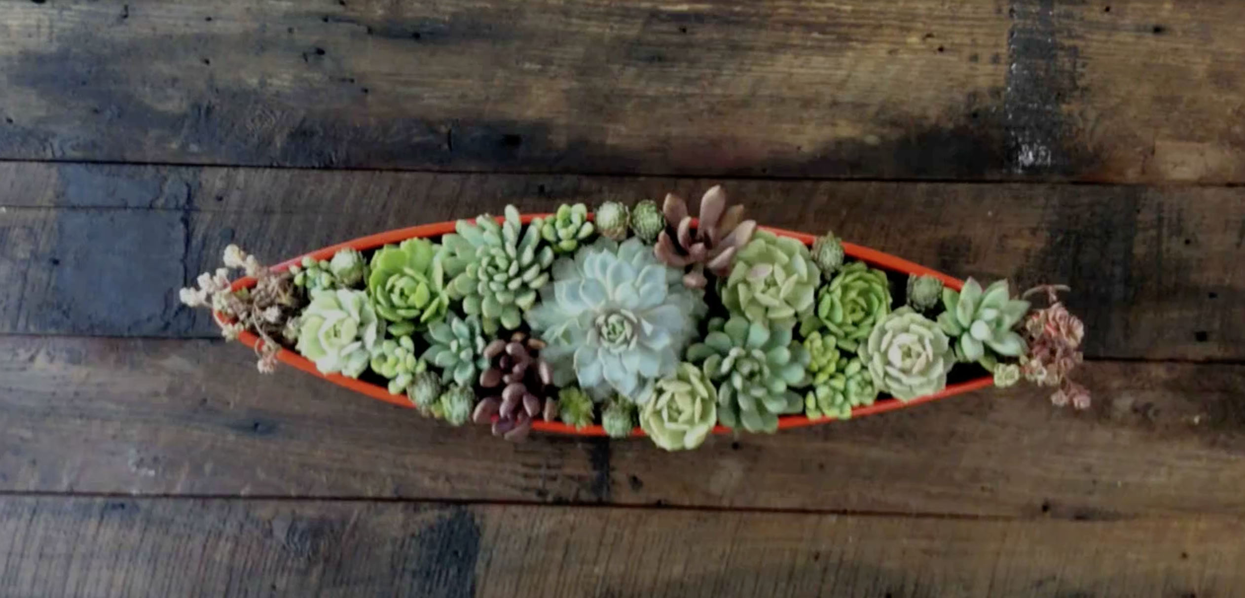How To Make A Succulent Centerpiece Sunset Magazine