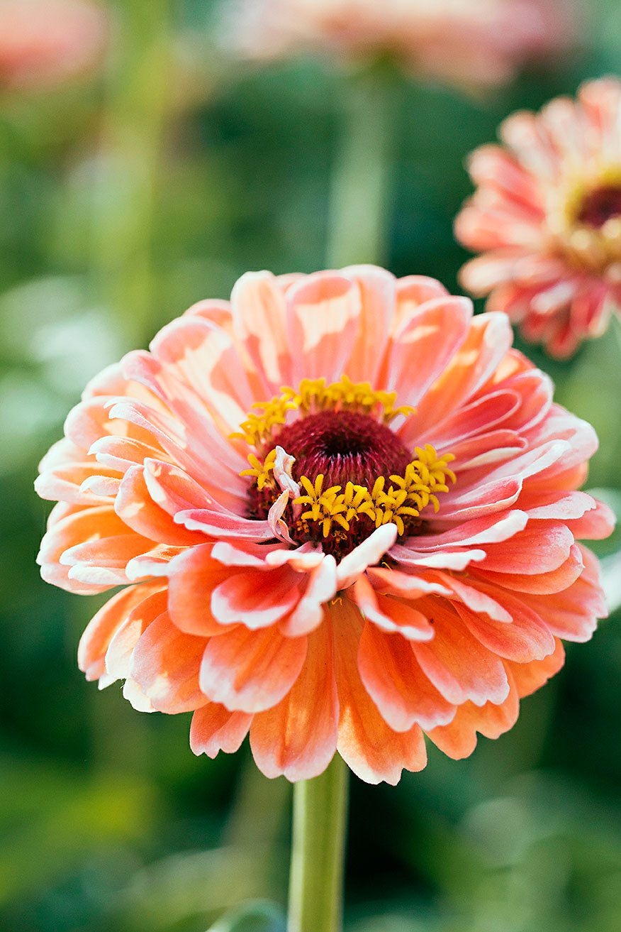 12 Best Flowers to Grow for Cutting
