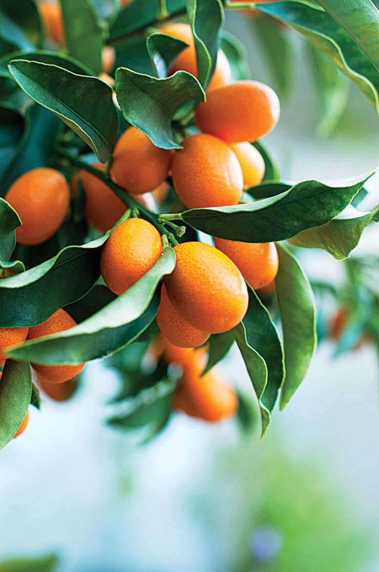 7 Best Citrus Trees to Grow