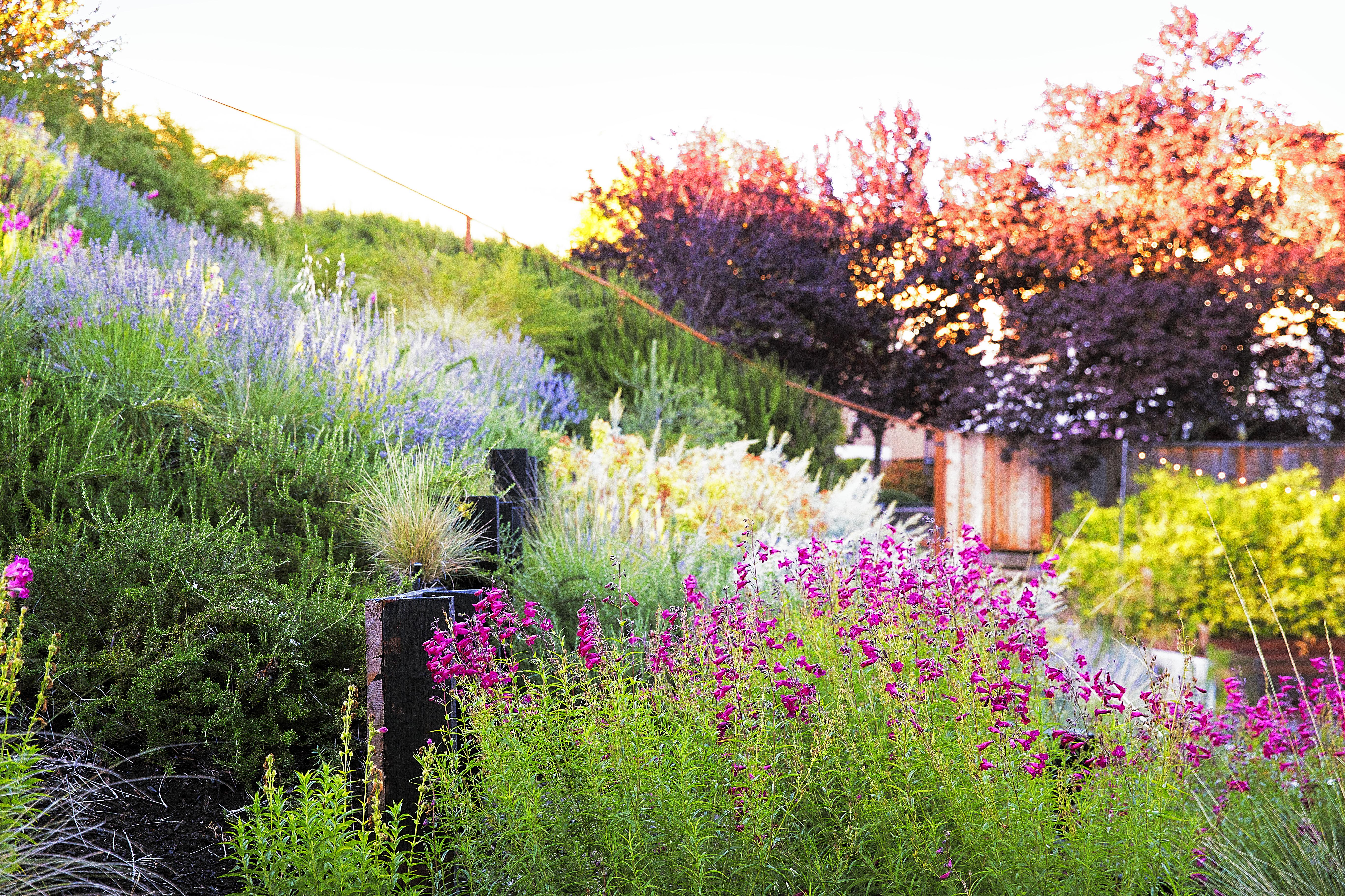 To Landscape A Garden 9 ideas for a hillside garden sunset magazine how to landscape a slope workwithnaturefo
