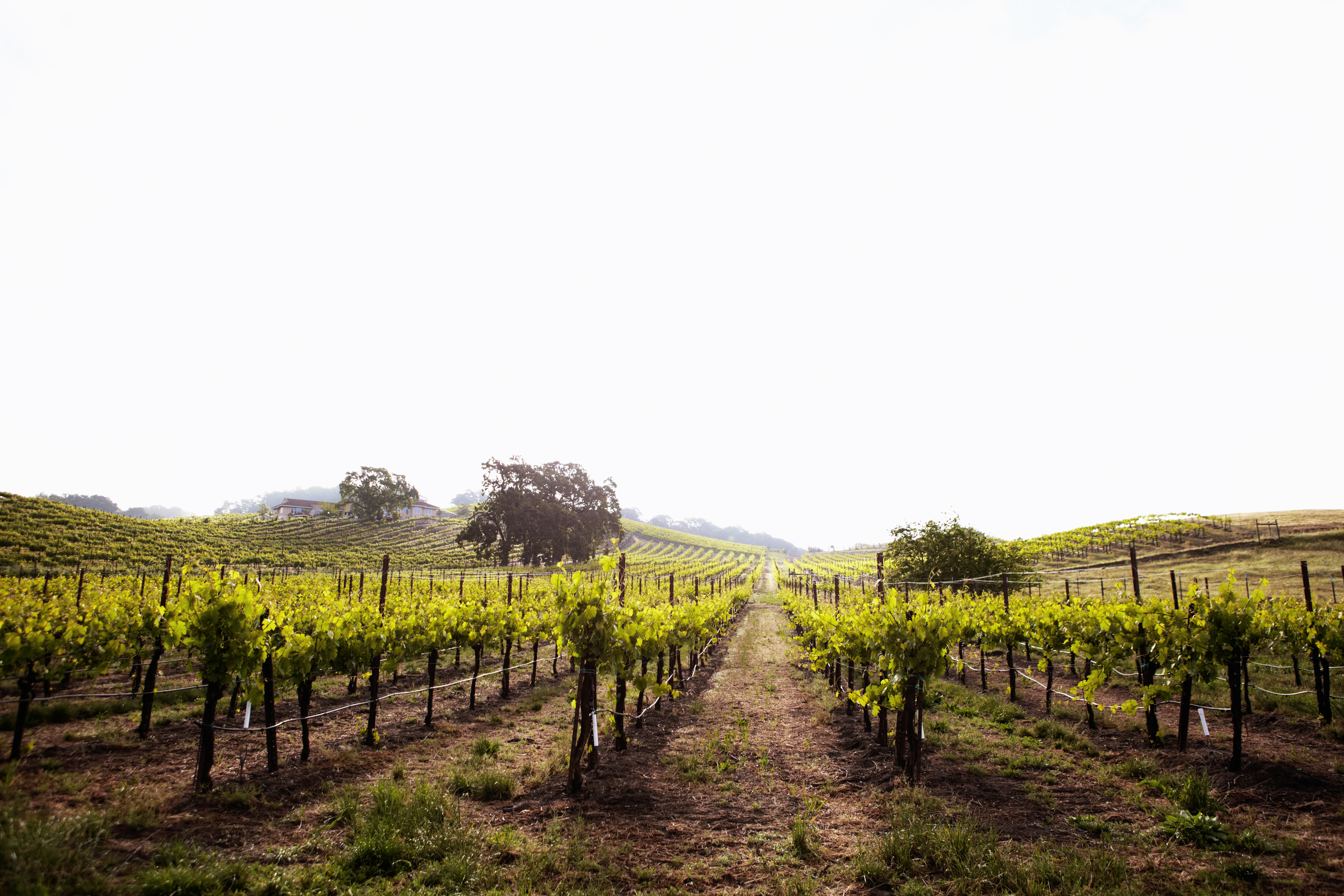 7 Great Dry Creek Valley Hotels - Sunset Magazine