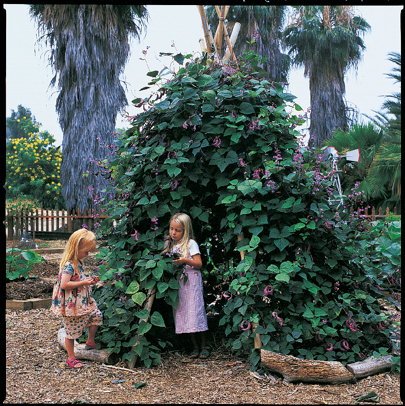 A Vine-Covered Tepee