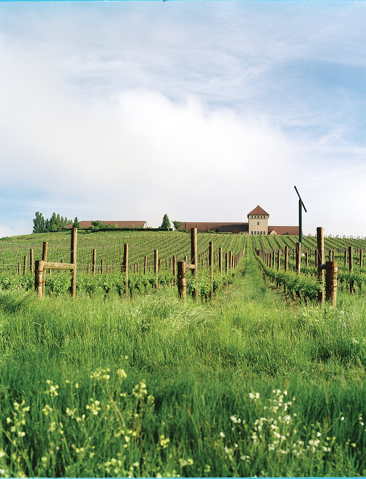 Top wine regions in the Northwest