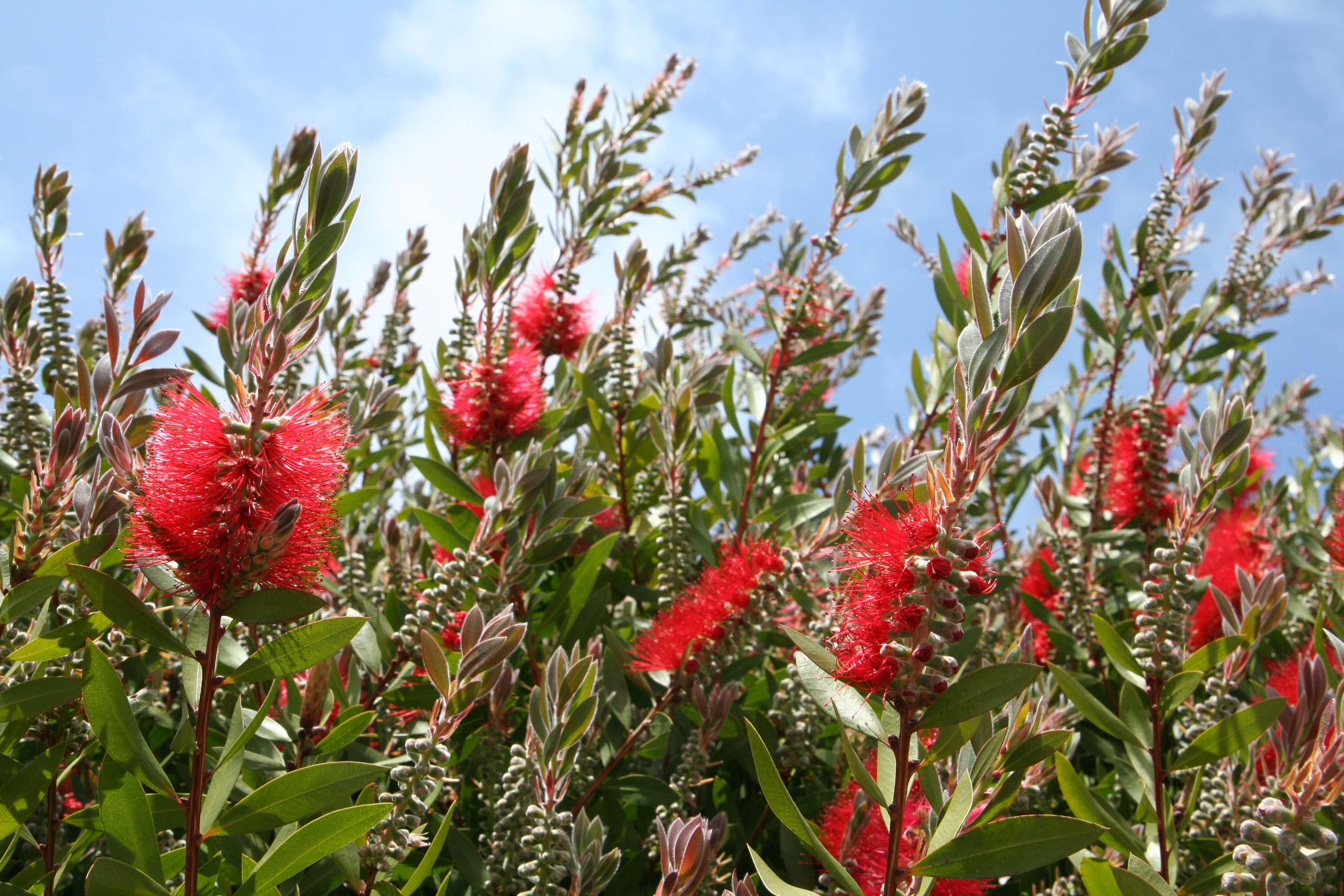 Top Unthirsty Flowering Trees Sunset Magazine