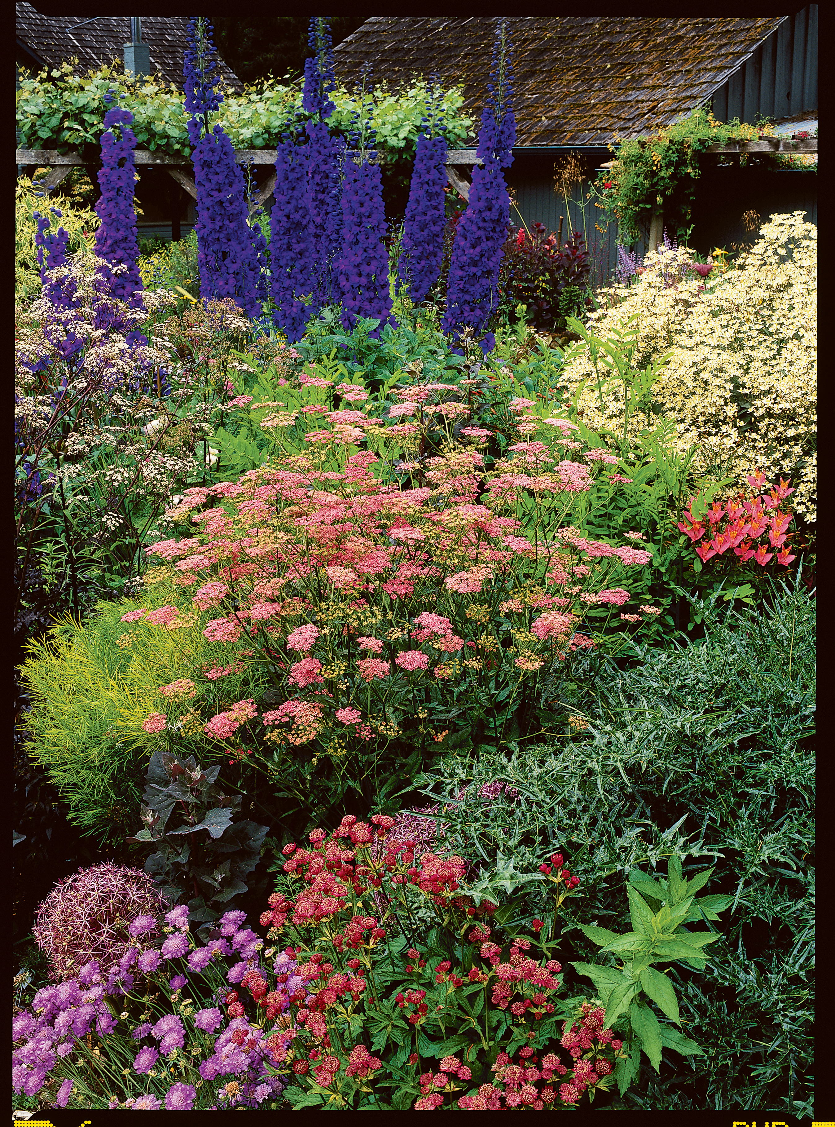Guide to cottage gardening sunset magazine step 1 pick plants for a cottage effect workwithnaturefo