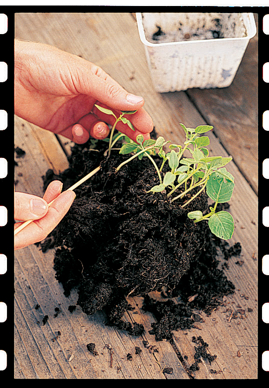 Step 2: how to plant seeds