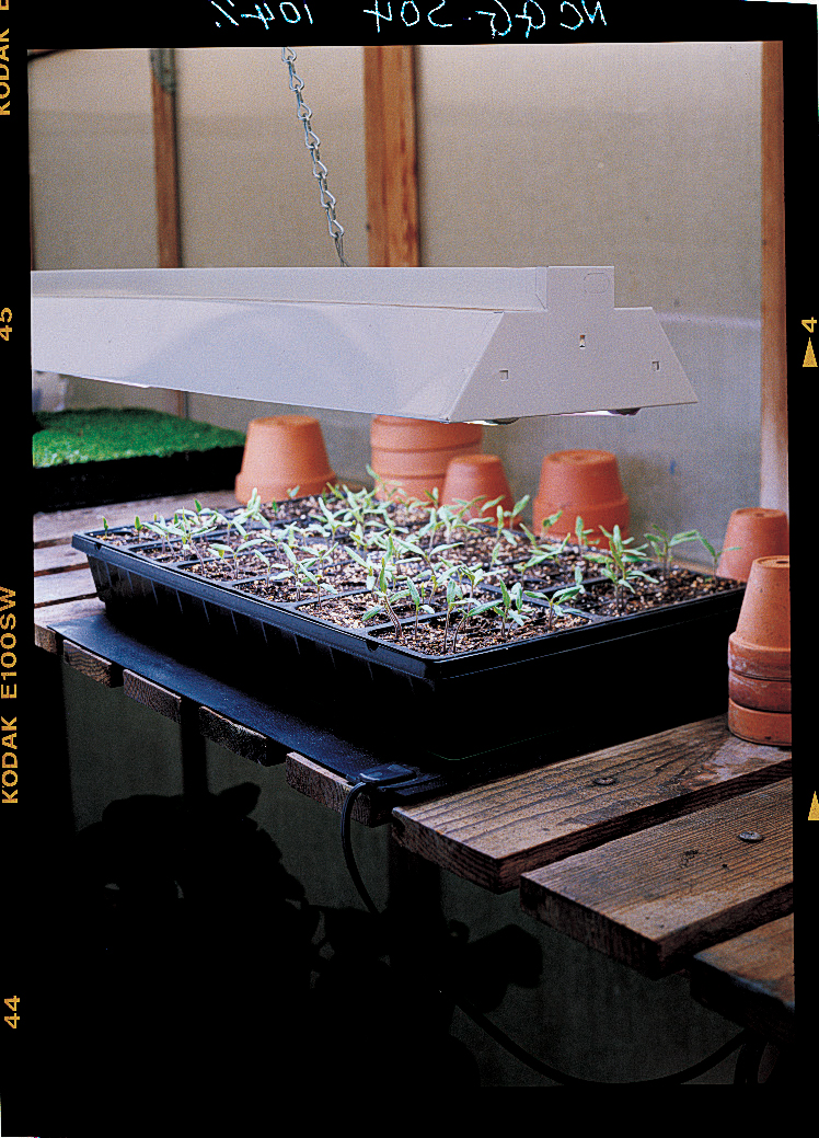A foolproof system for starting seeds