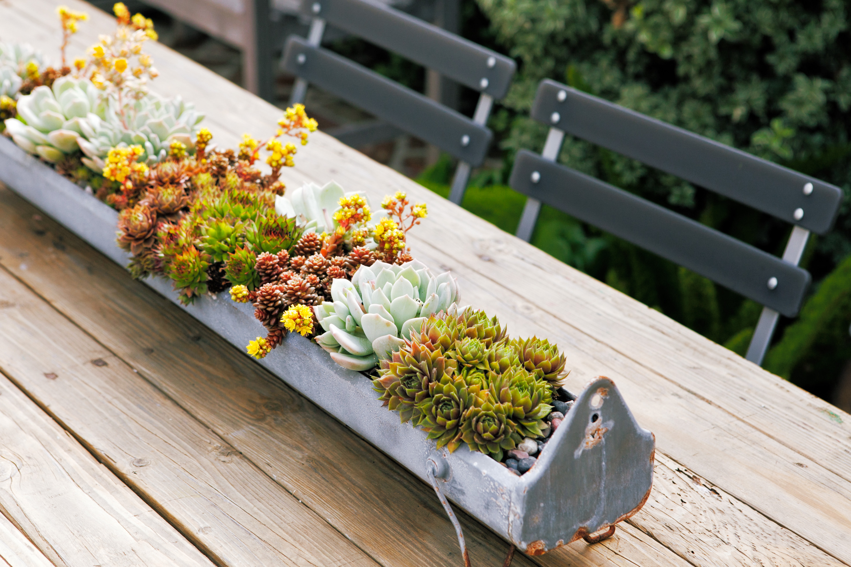 Container Designs With Succulent Plants Sunset Sunset