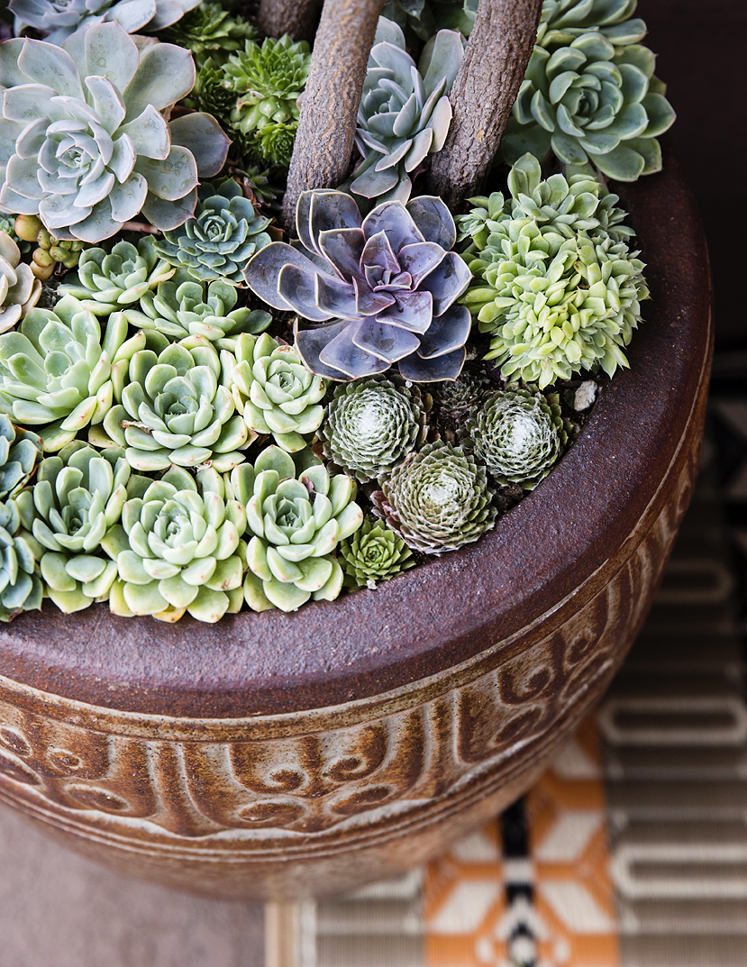 Under Plant With Succulents
