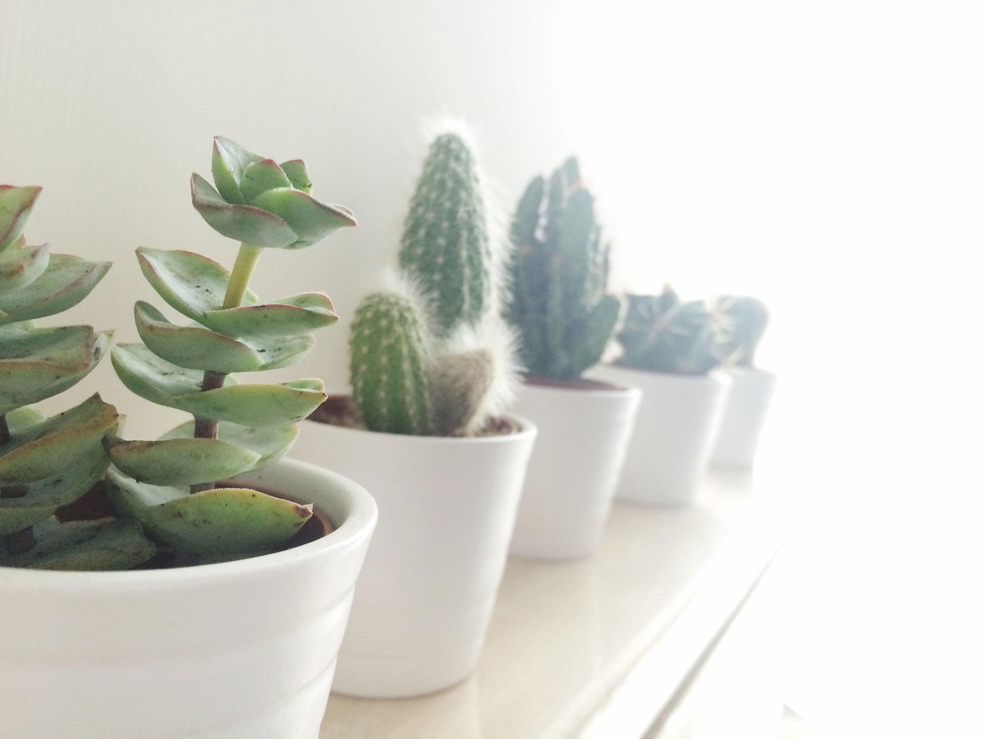 Indoor Succulents That Thrive Sunset Magazine