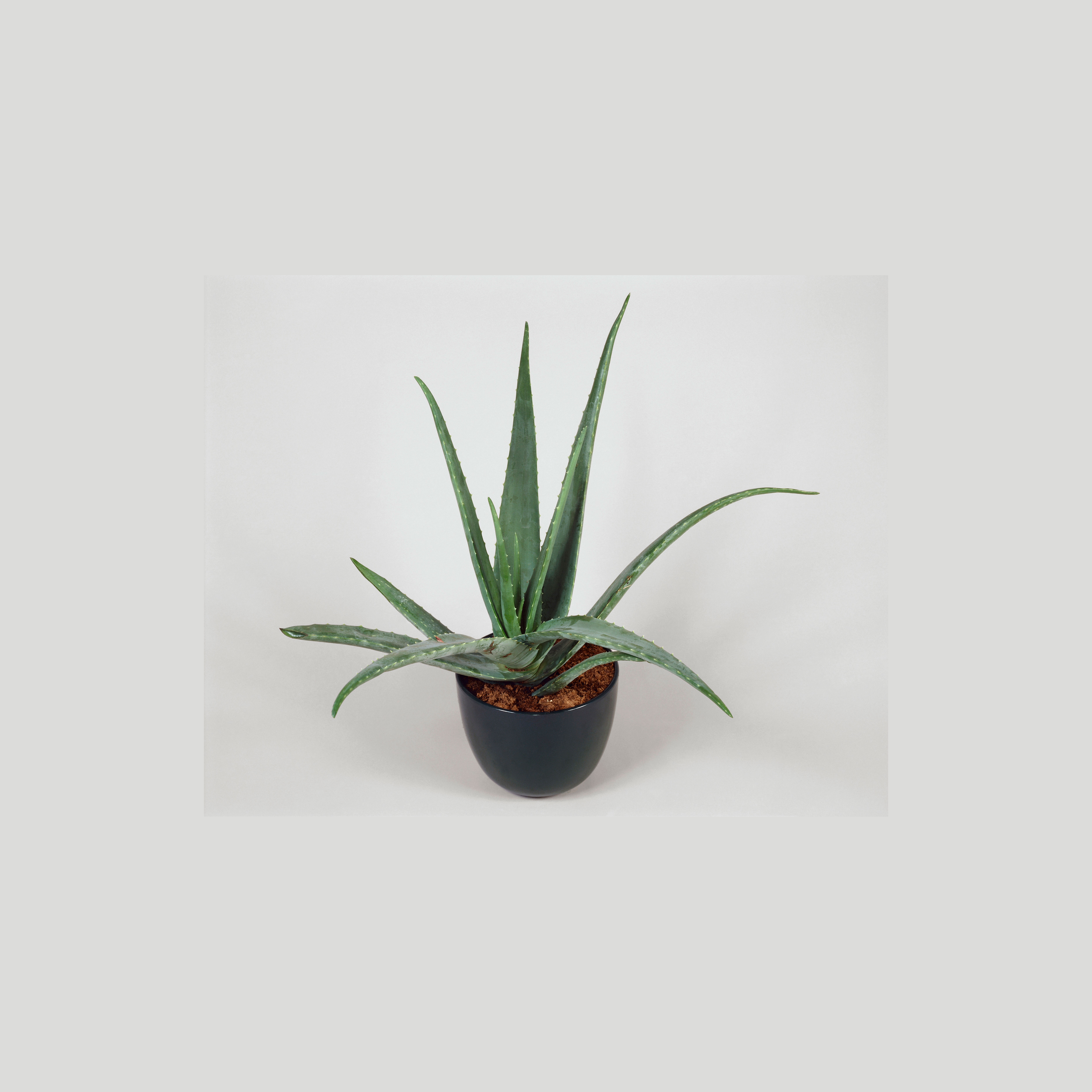 10 Easy Houseplants to Clean the Air and Boost Your Mood - Sunset ...