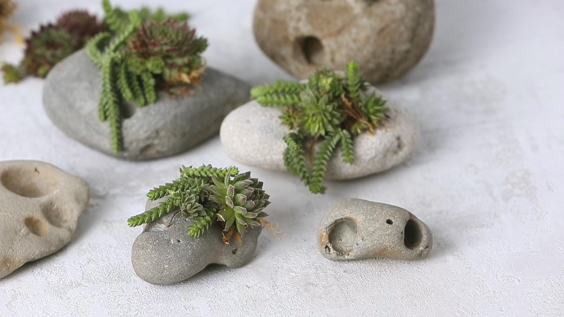 How To Make Succulent Rocks Sunset Magazine