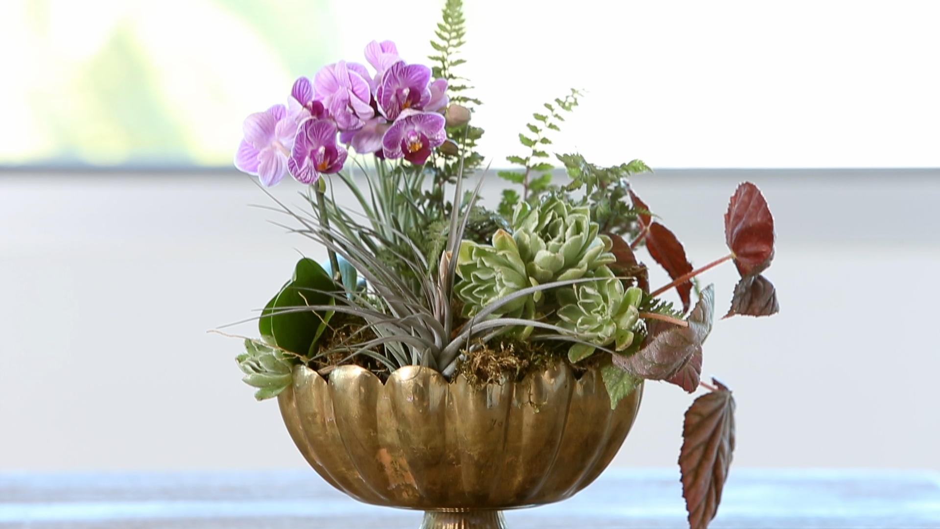 How To Make An Orchid Arrangement Sunset Magazine