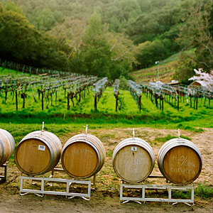 Chouinard Vineyards
