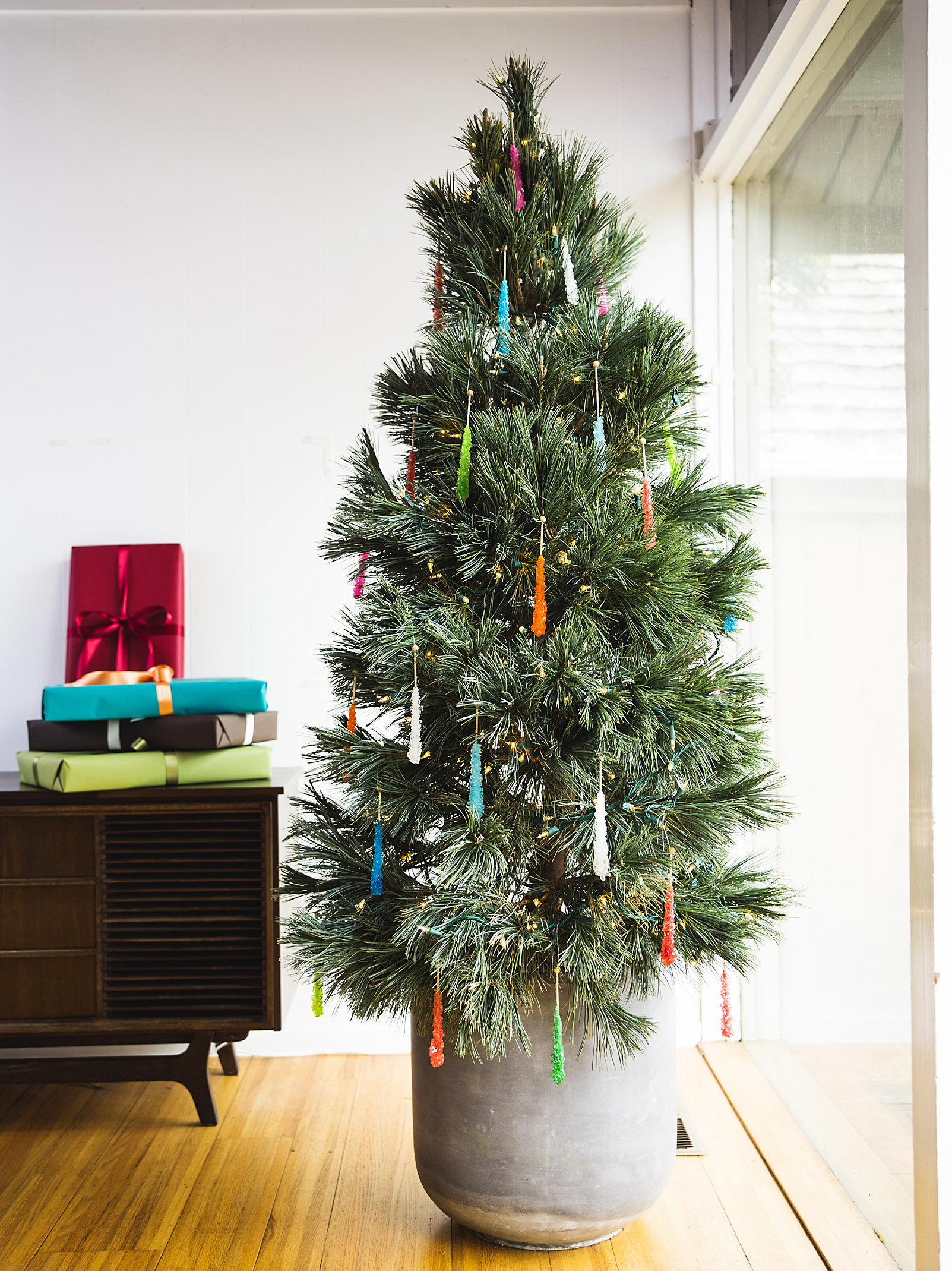 How To Take Care Of A Real Christmas Tree.How To Care For A Living Christmas Tree Sunset Magazine