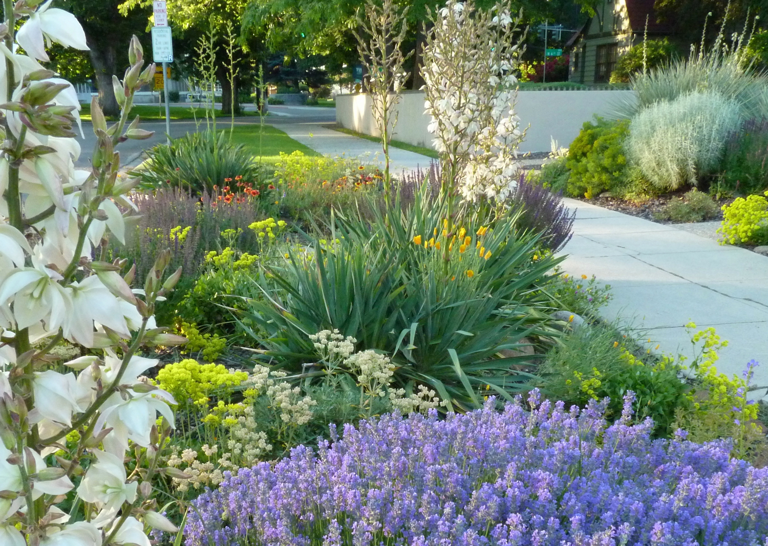 8 Easy Care Plants For Parking Strip Gardens Sunset Magazine