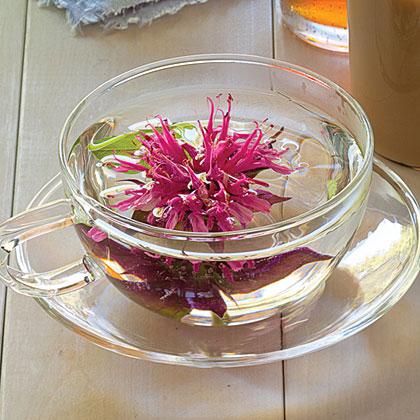 su-Flowering Bee Balm