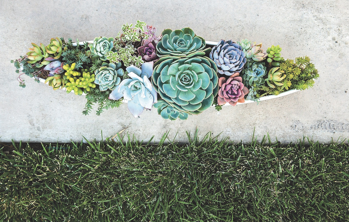 Weekend Diy Succulent Container Sunset Magazine