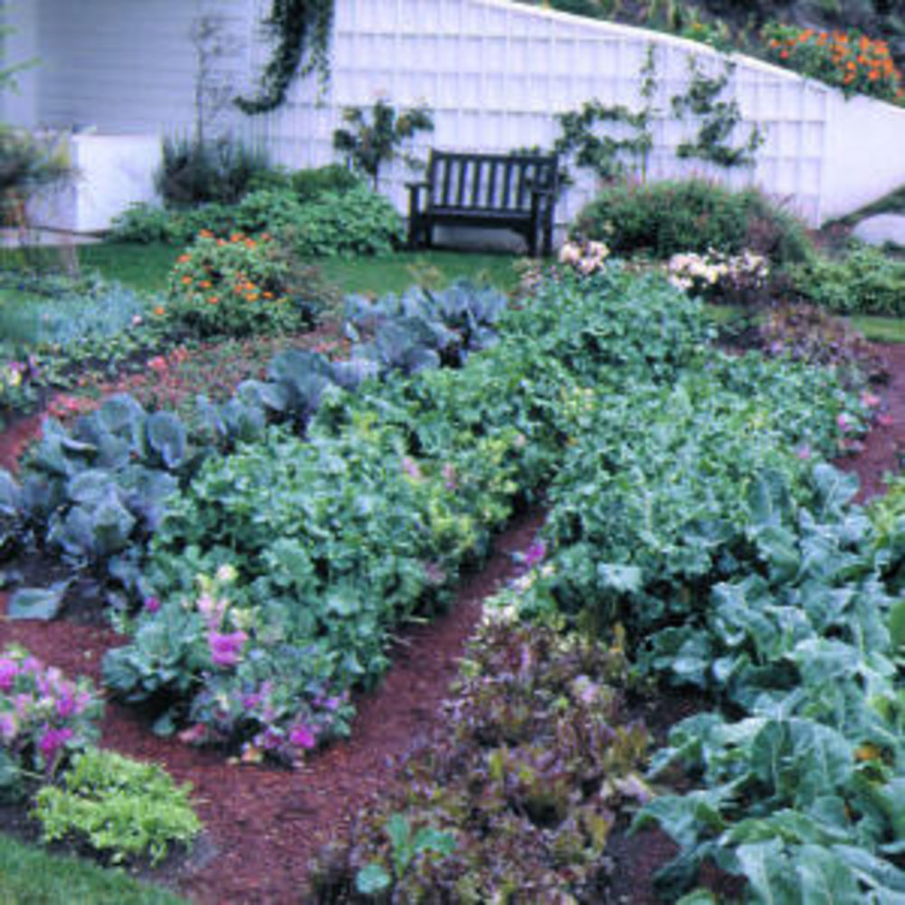 Protect Plants From Frost Sunset Magazine