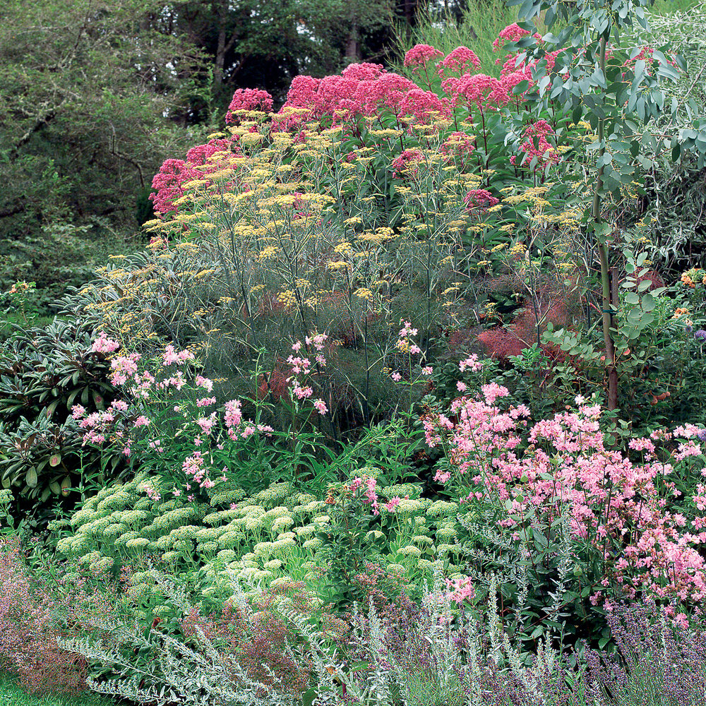 Great garden borders: The basic ingredients