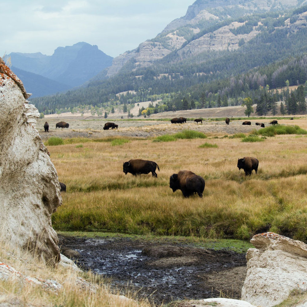 Must See in Yellowstone: 13 Incredible Sights in the National Park