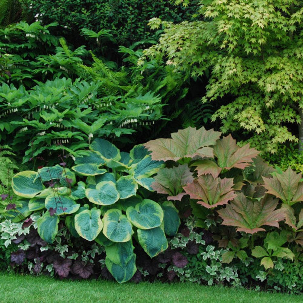 11 Great Shade Gardens