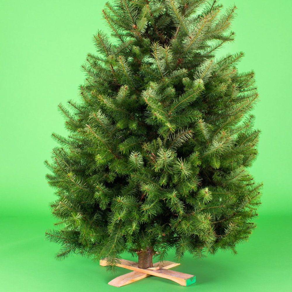 Fresh vs. Fake: Choosing the Right Christmas Tree - Sunset Magazine