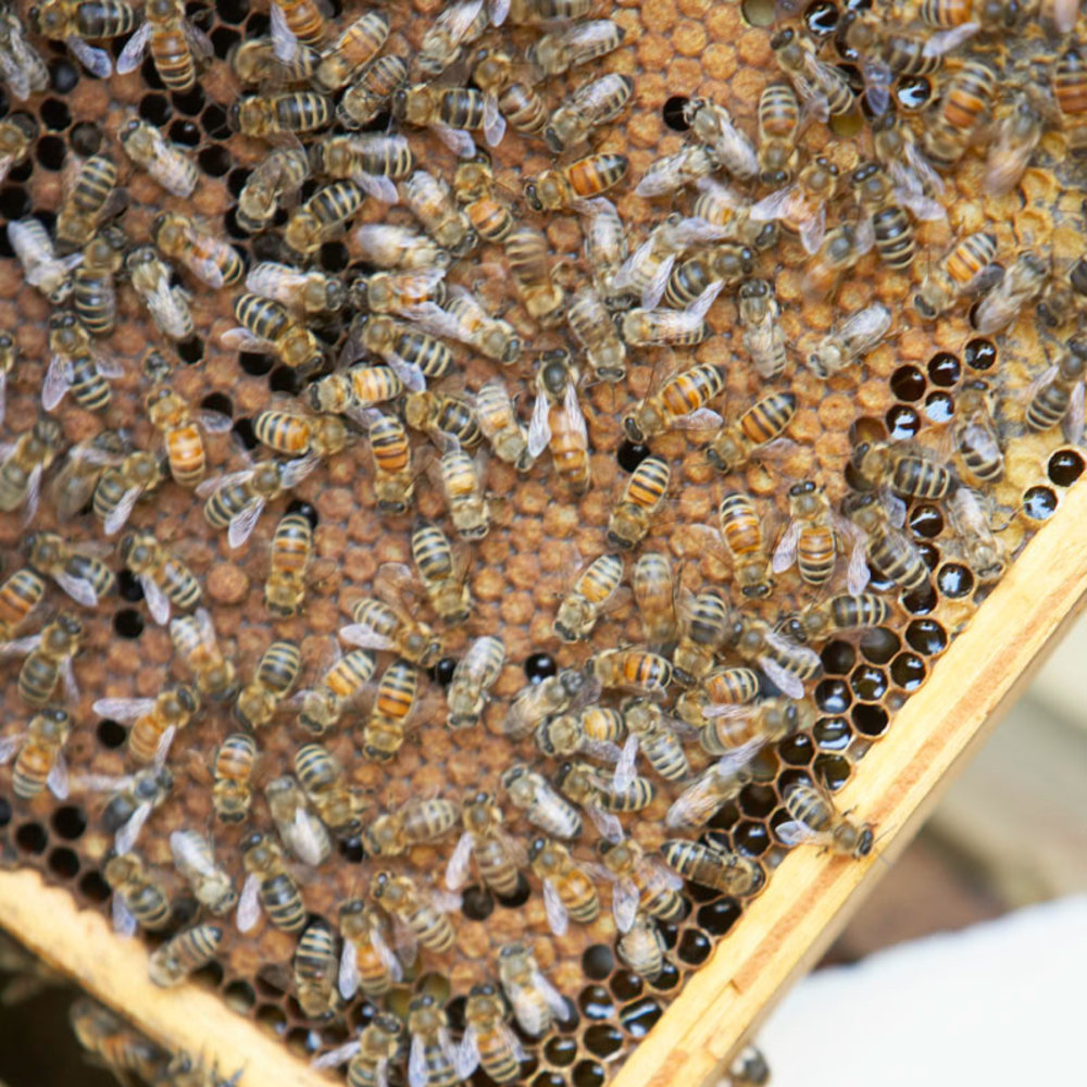 Beekeeping Basics How To Raise Honeybees In Your Backyard