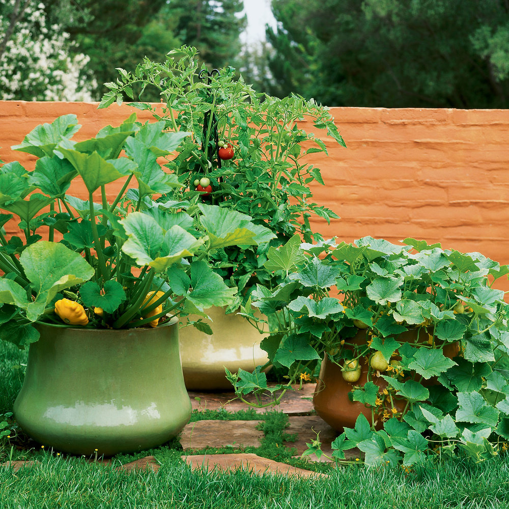Container Growing Vegetables How to grow vegetables in pots sunset magazine how to grow vegetables in pots workwithnaturefo