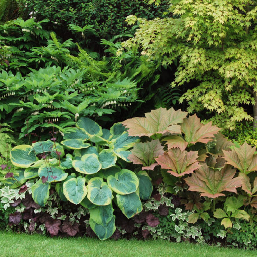Great Foliage Border Plants - Sunset Magazine
