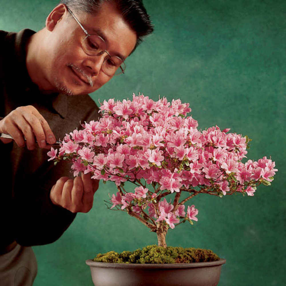An Easy Azalea Bonsai Sunset Magazine