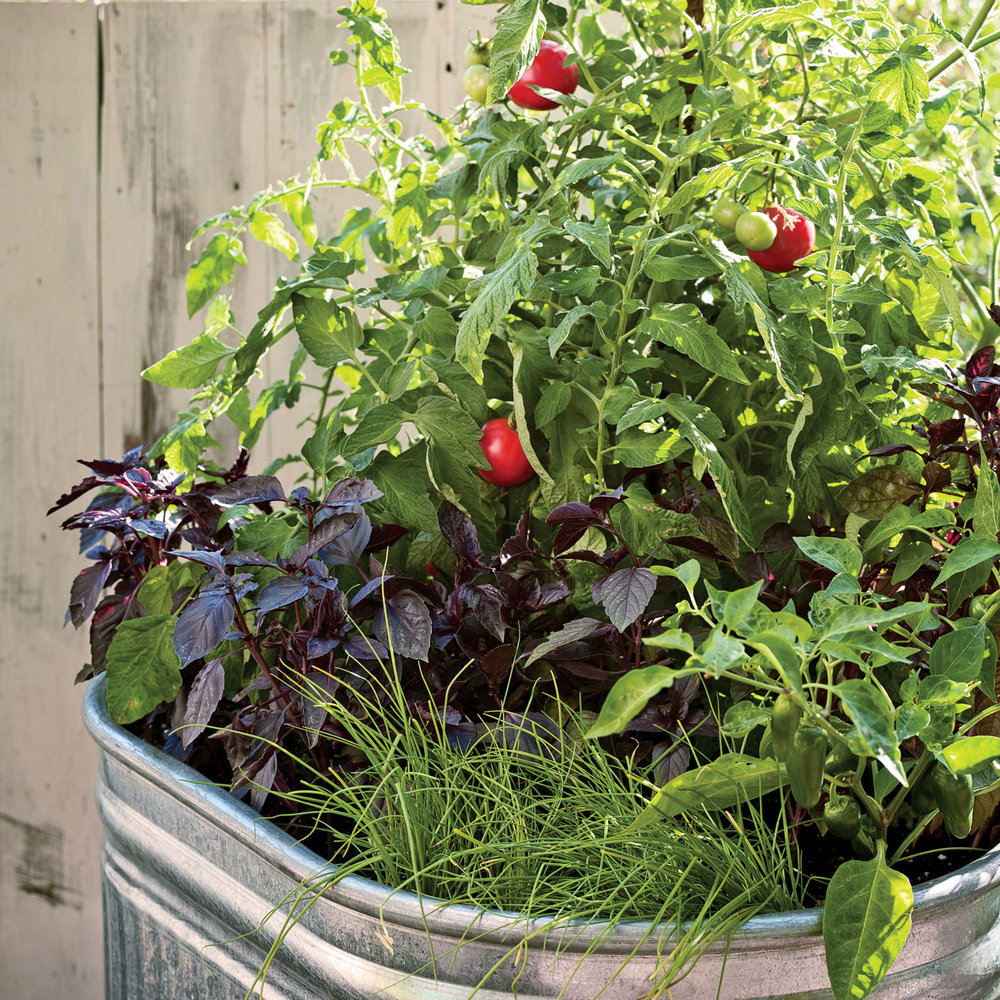 Container Growing Vegetables Plant a one pot vegetable garden sunset magazine one pot vegetable garden workwithnaturefo