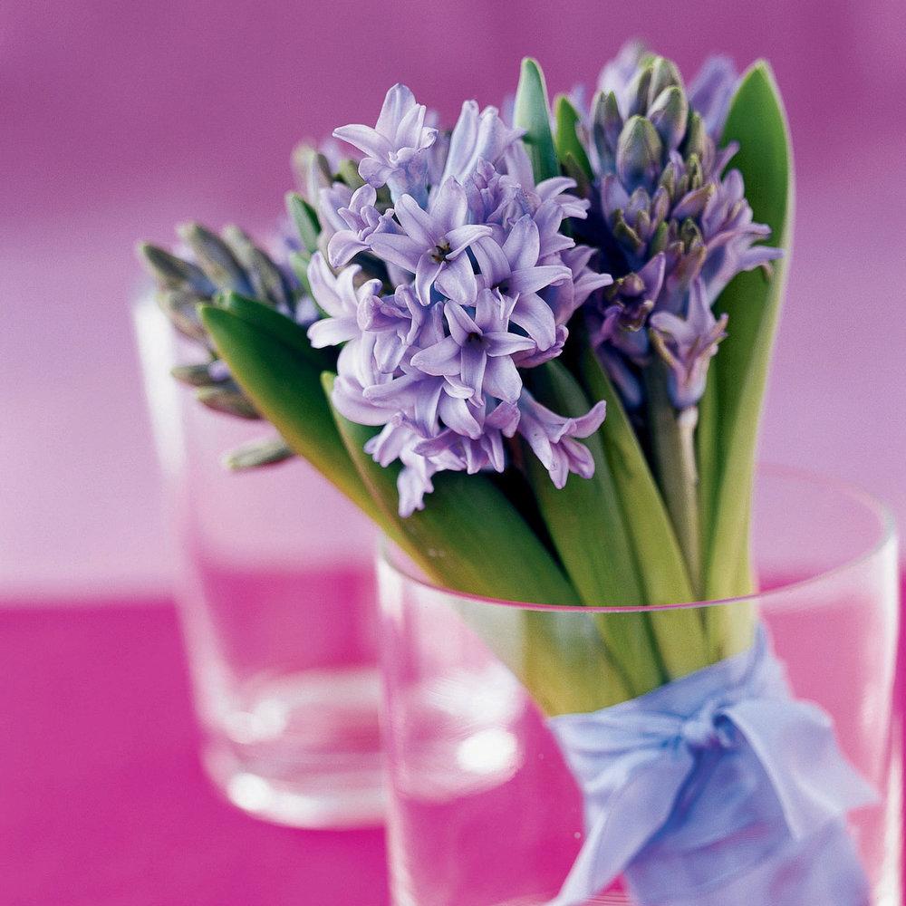 Easy to grow from bulbs, fragrant hyacinths are a fresh choice for a ...