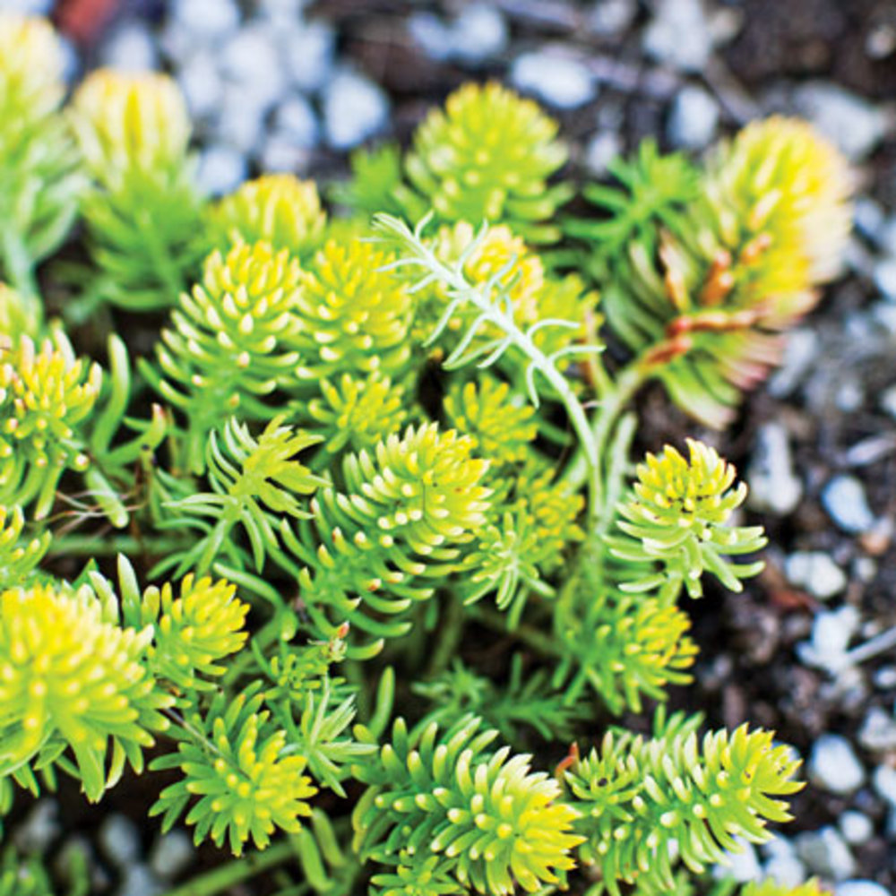 Drought Tolerant Front Yard Lanscaping Sunset Magazine