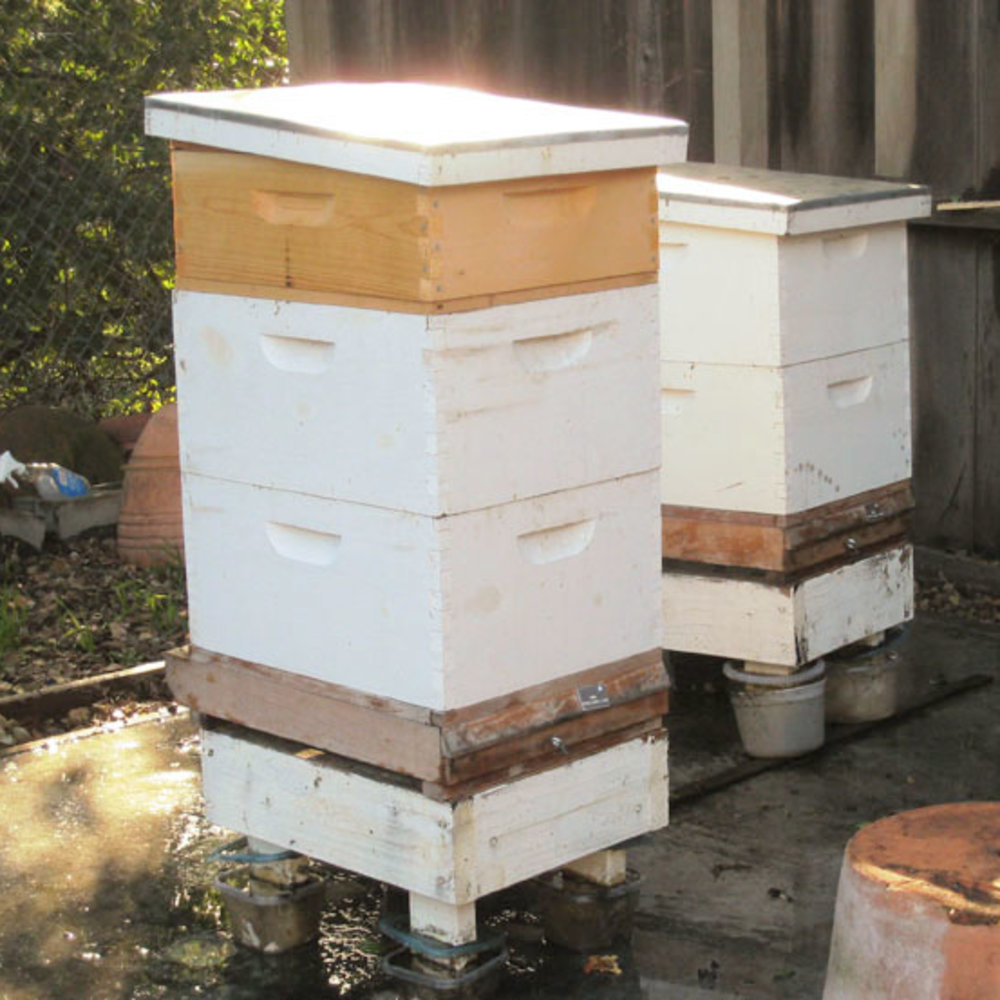 Essential Tips for Backyard Hives