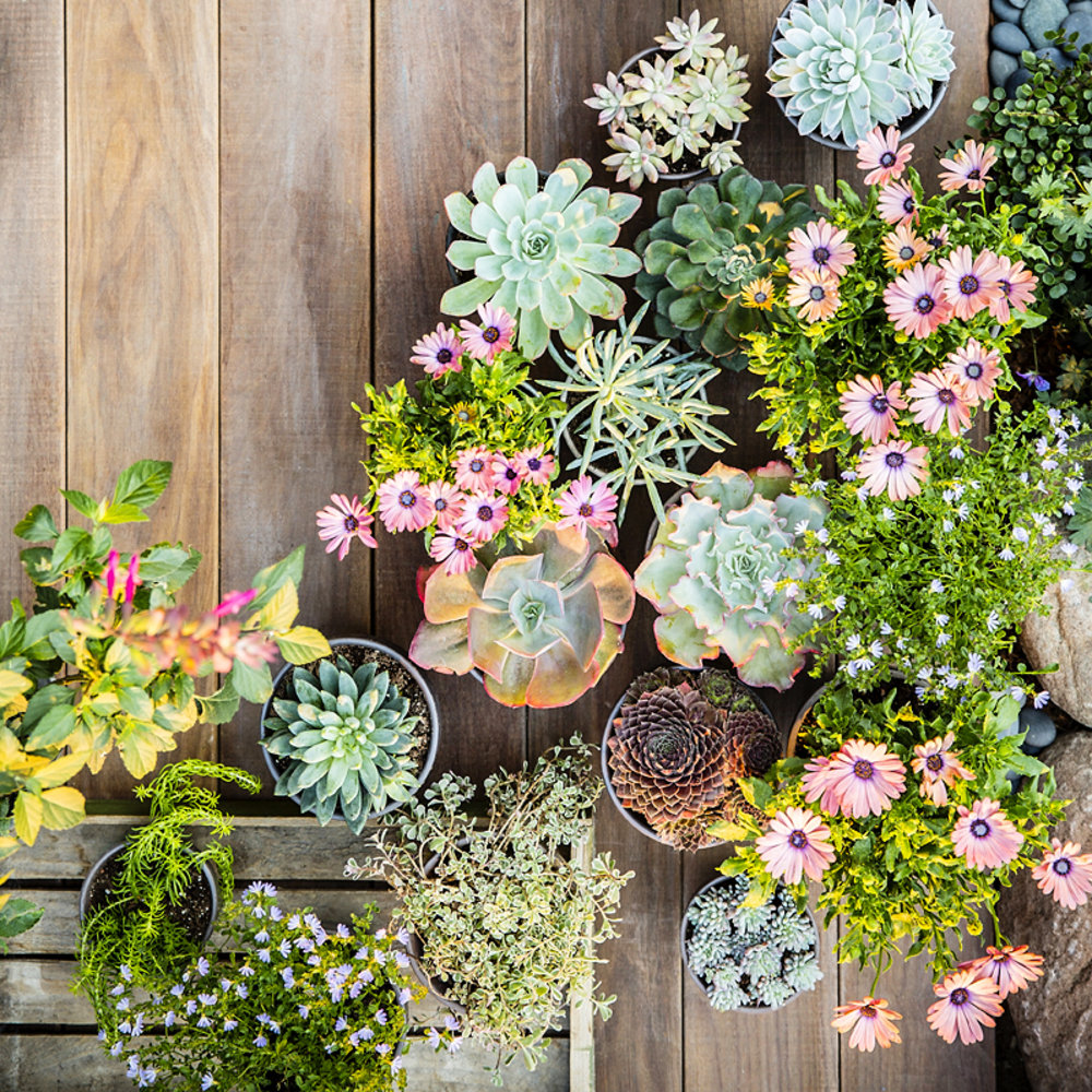 38 ideas for succulents in containers sunset magazine for Garden design using succulents