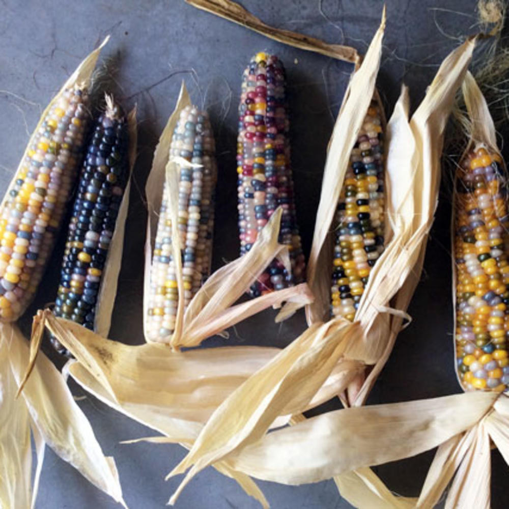 Glass Gem Corn Simply A Maize Ing Sunset Magazine
