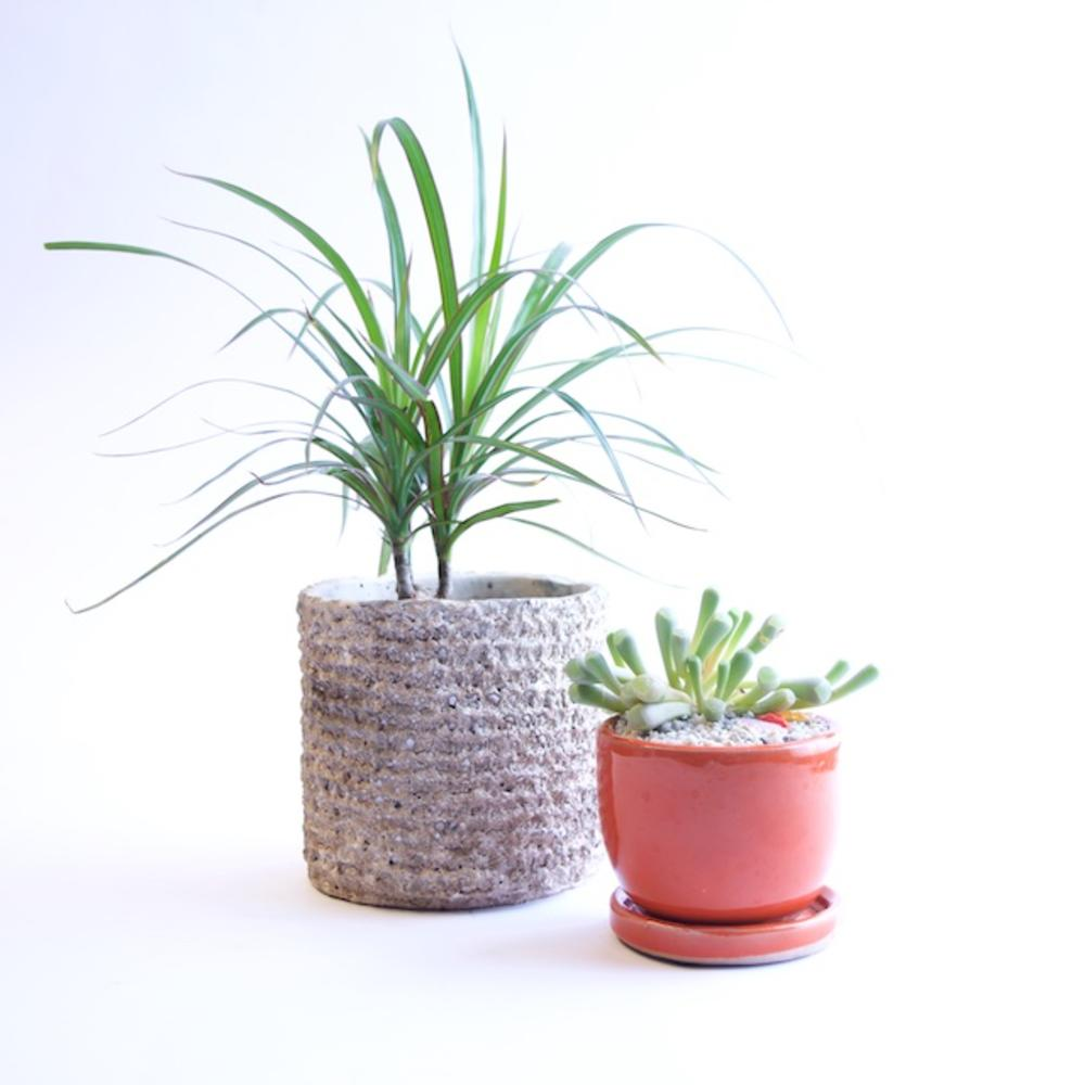 Houseplants Does Your Planter Need A Saucer Sunset Magazine