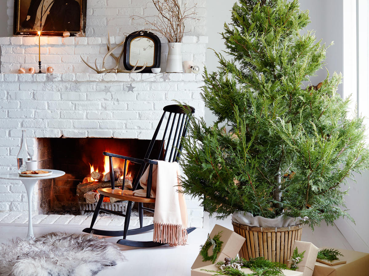 Fir Trade: A Buyer's Guide to Holiday Trees