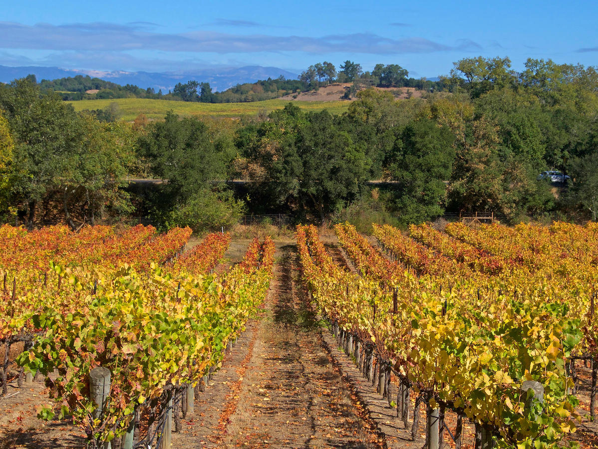 Sonoma County Rises from the Ashes