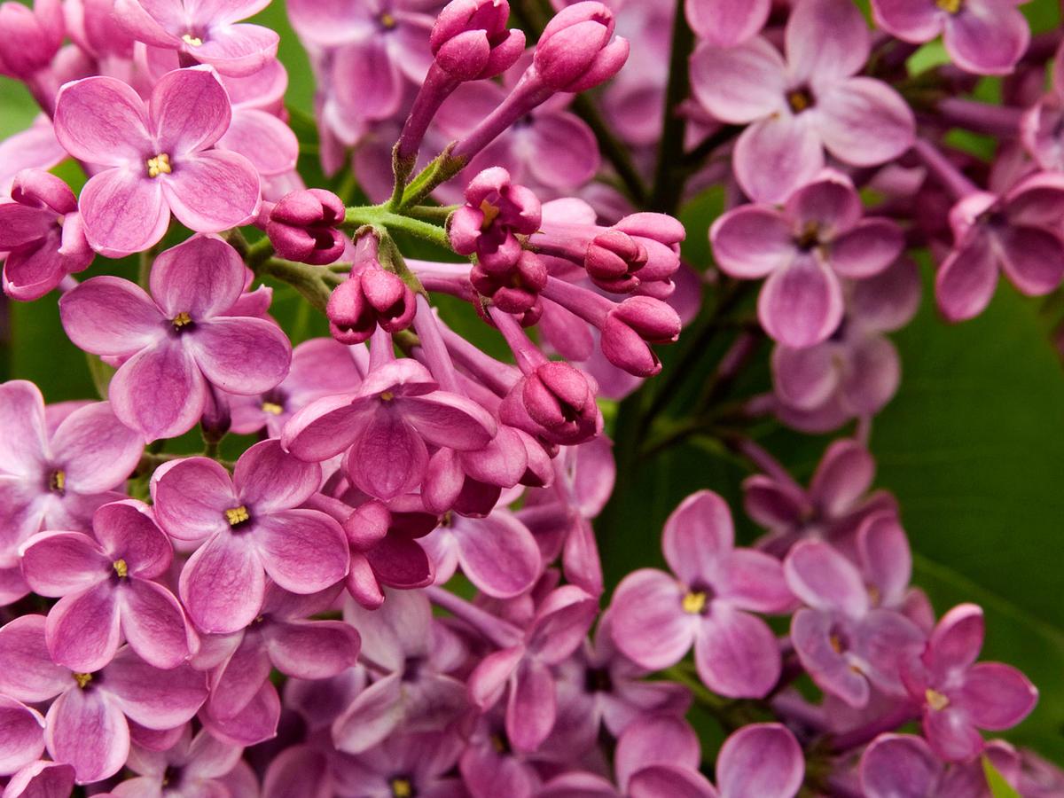 Best Fragrant Flowers Sunset Magazine