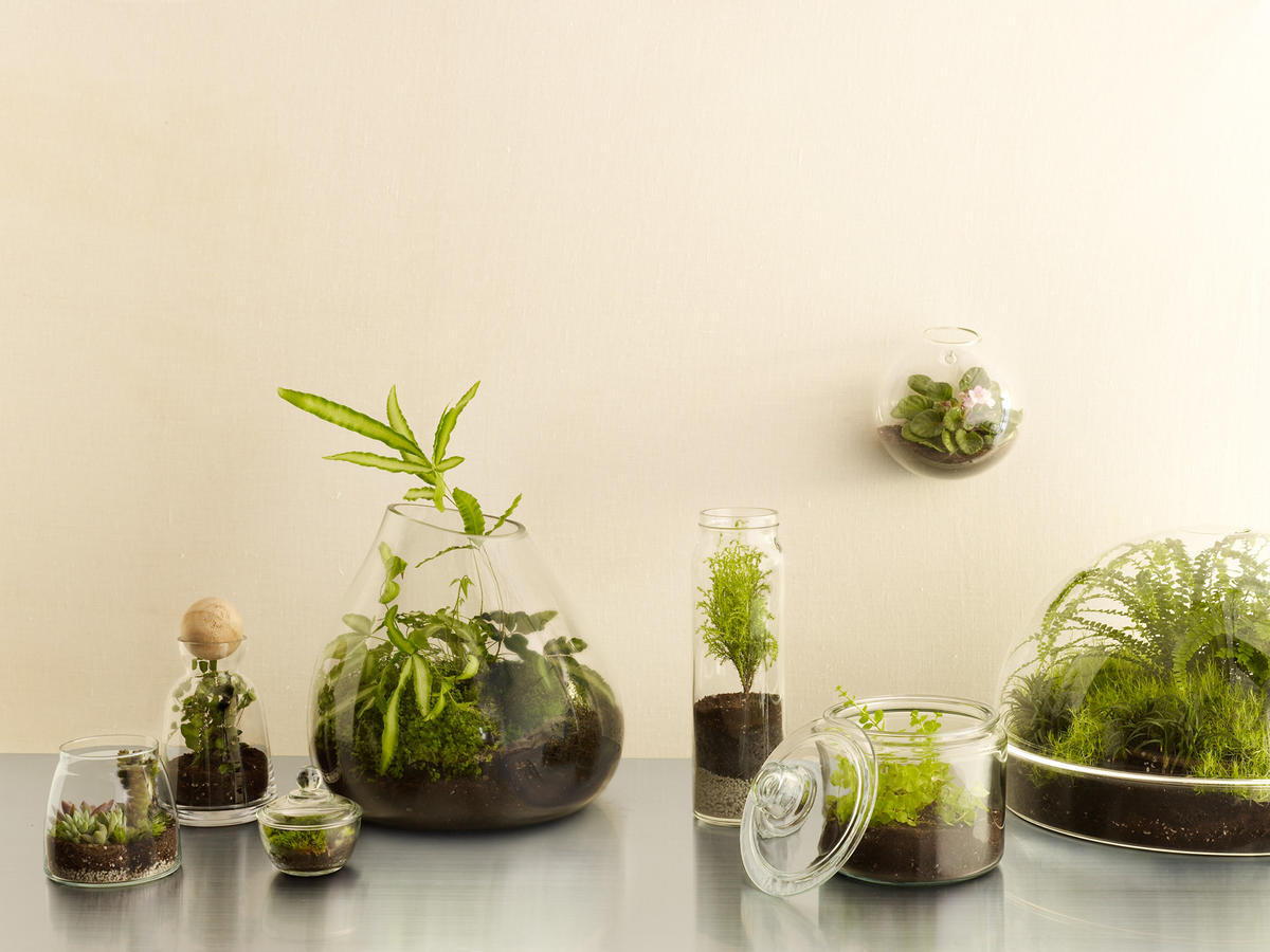 8 Cool Diy Terrariums Sunset Magazine