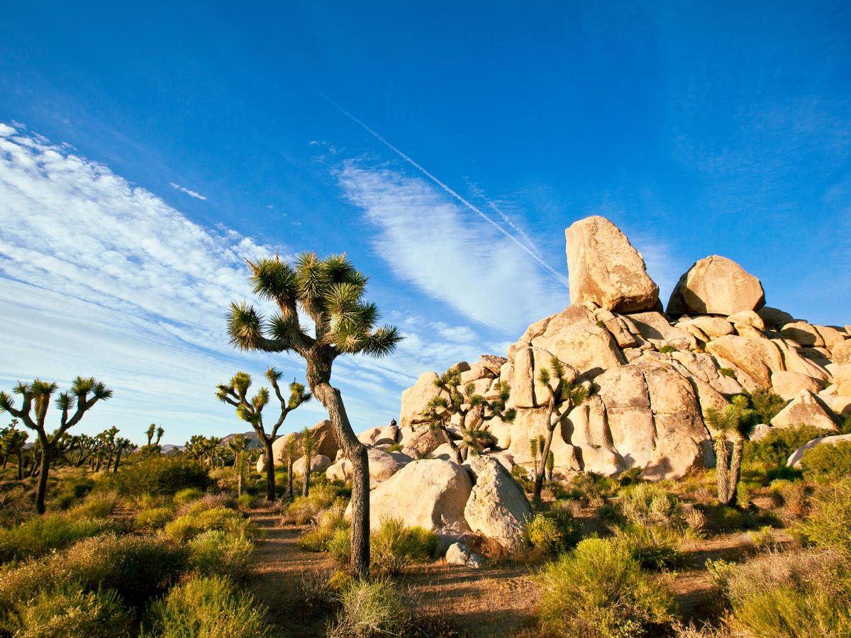 Where to Stay & Dine in Joshua Tree N.P.