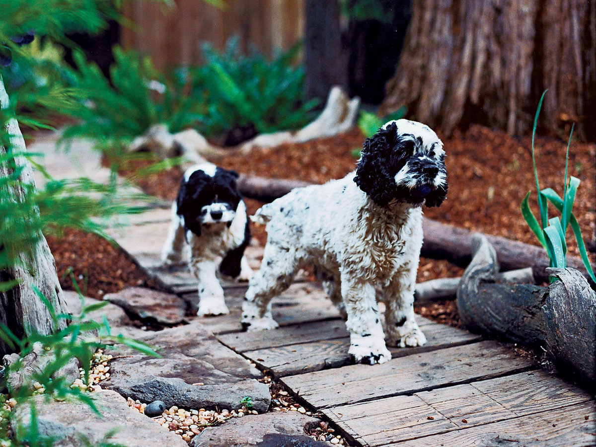 Dog Friendly Garden Features - Adelaide Builder