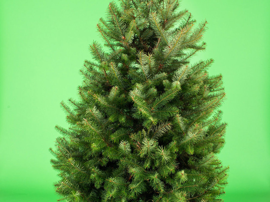 11 Sustainable Christmas Tree Choices - Sunset Magazine ...