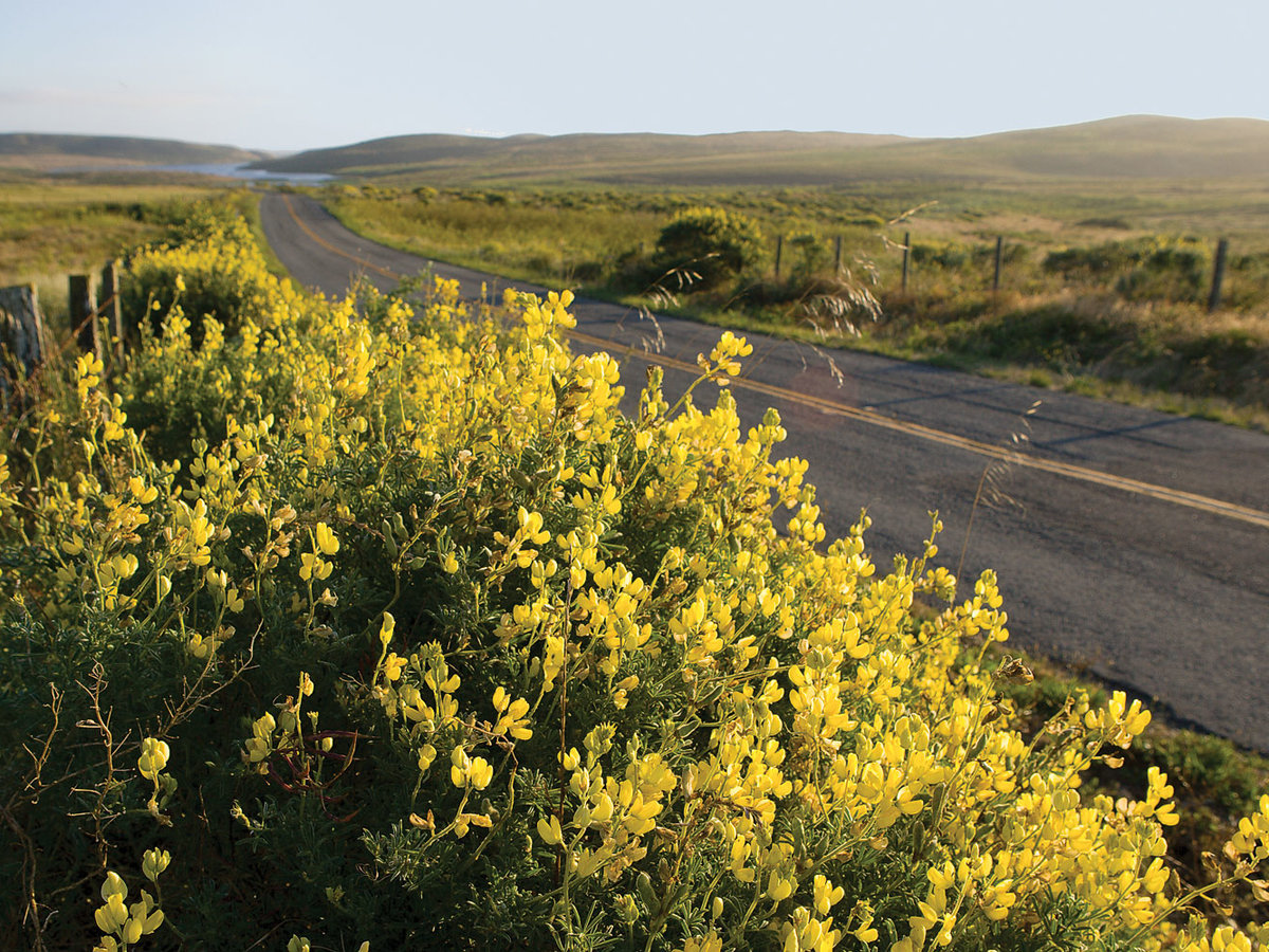 Sunshine blooms at Point Reyes
