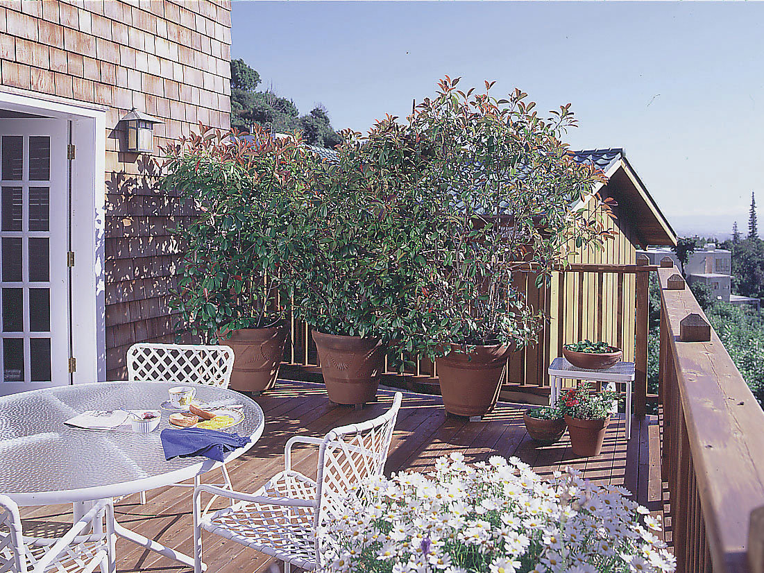 Well Mannered Trees And Shrubs Can Create Sheltered Garden