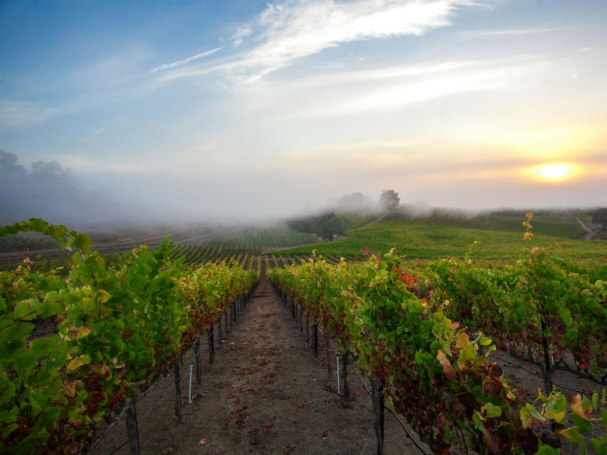 3 Top-Notch Road Trips You Can Do Now in Sonoma County