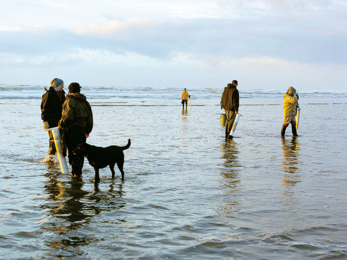Razor clamming in Westport, WA.