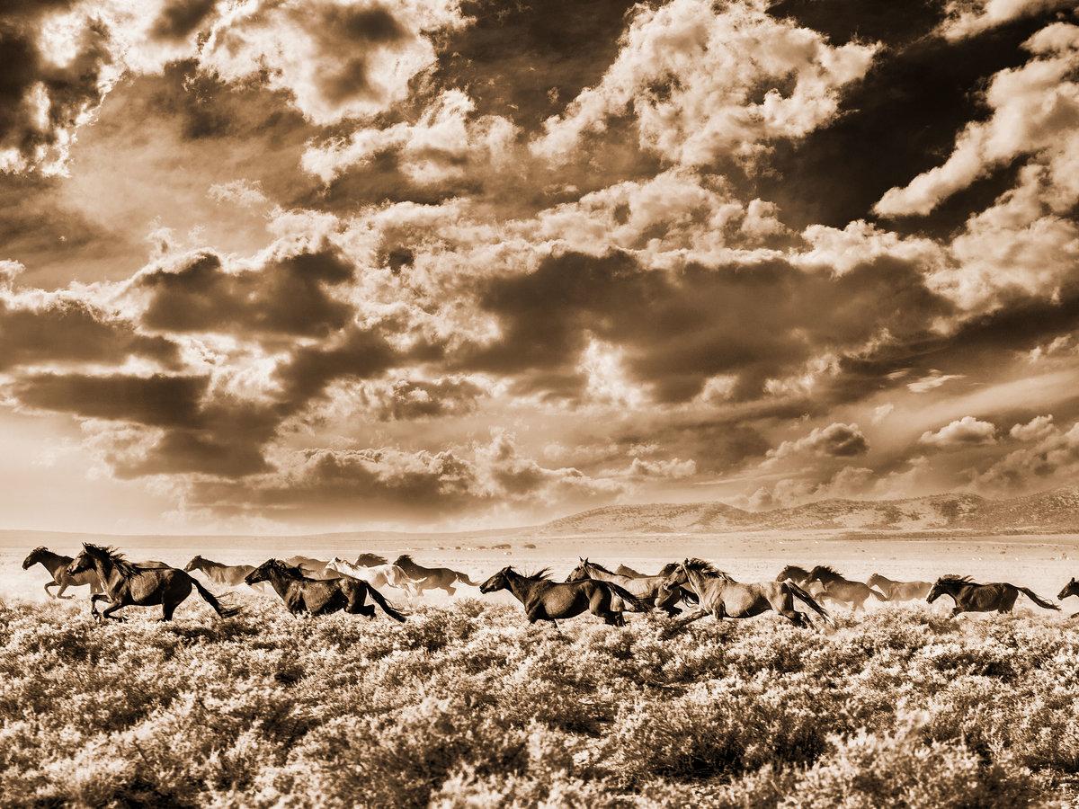 The Fight Over America S Wild Horses Sunset Magazine